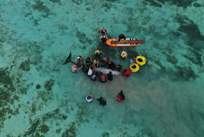 Screen-Cook-Islands-82